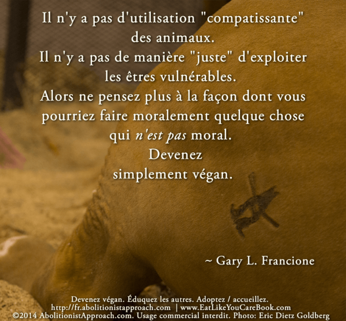 20140525-golden_cow_no_compassionate_use-FR2