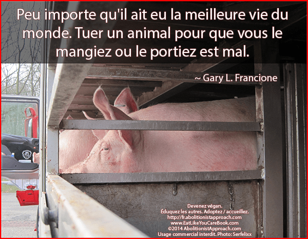 20140602-transport_check_animals_pigs-FR1